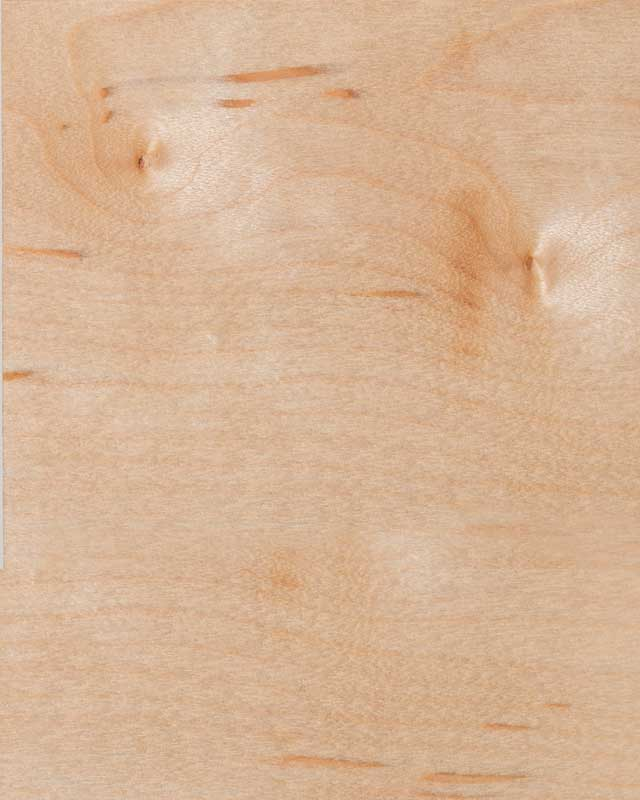 Maple Wood Species